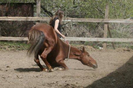 amazing_horses_11.jpg