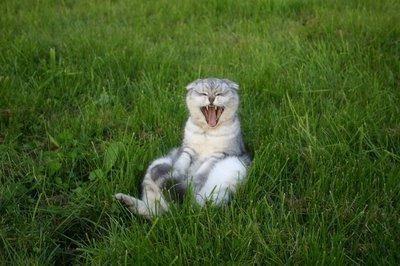 cats_family_2-775791.jpg