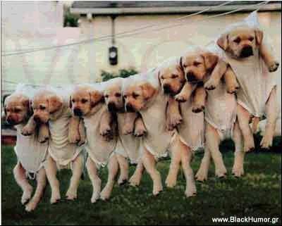 babe_dogs.jpg