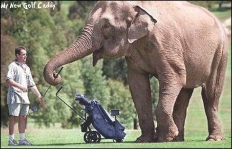golfcaddy.jpg