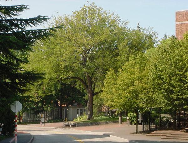 trees_buselm